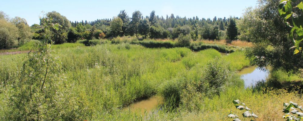 Marais dans le parc du Sausset © SAGE CEVM
